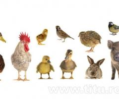 Produse premium pentru uz veterinar (vitamine, antiinflamatorii, etc.)